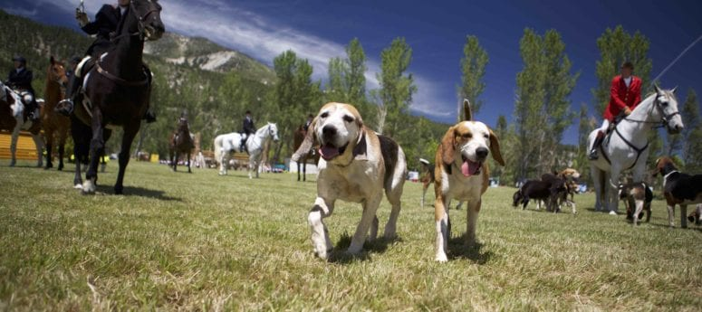 Water, Rails, Koi, BBQ, Hounds and Horses…Oh My!