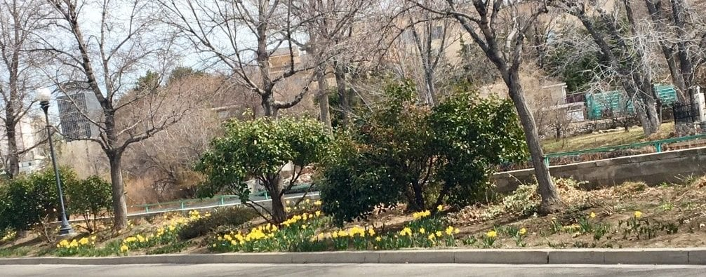 Rotary Club of Reno Biggest Little Bulb Project Blooms 1