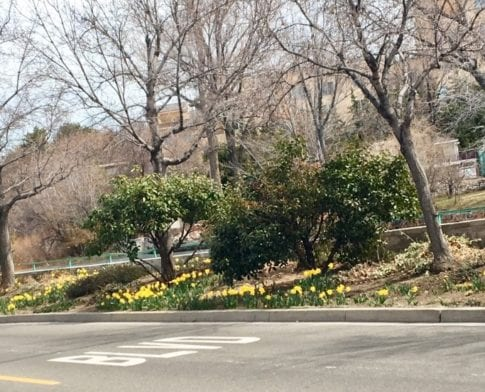 Rotary Club of Reno Biggest Little Bulb Project Blooms
